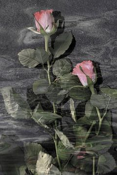 Rozen in het water van Christine Nöhmeier