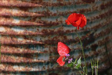 Ein Fass voller Mohnblumen von Jan Katuin