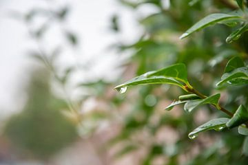 Regendruppel van Anouk IJpelaar