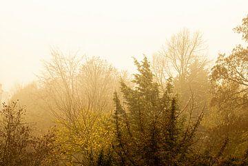 Amsterdamse bos herfst van Sander Jacobs