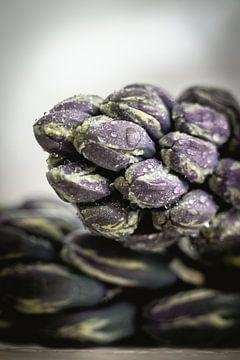 Hyacint van Maaike Zaal