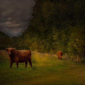 Hollands landschap in Drenthe met Schotse hooglanders in weiland in de stijl van de oude meesters van ina kleiman