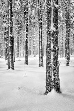 Winterwald - Tief verschneite Ardennen von Rolf Schnepp