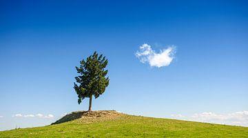 Einsamer Baum auf einem Hügel. von Ruurd Dankloff
