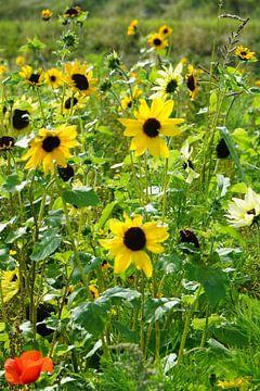 bloemenveld van Angelique Rademakers