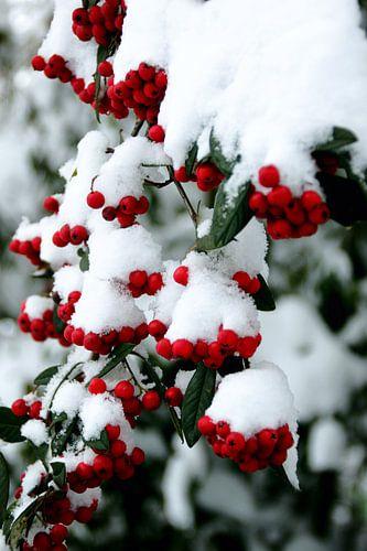 rood + groen + wit = kerstgevoel van