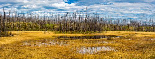 Afgebrand bos, Stikine regio, Canada