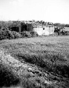 Landschaft Sizilien von Liesbeth Govers voor omdewest.com