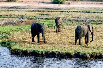 De olifant van Chobe National Park van Merijn Loch