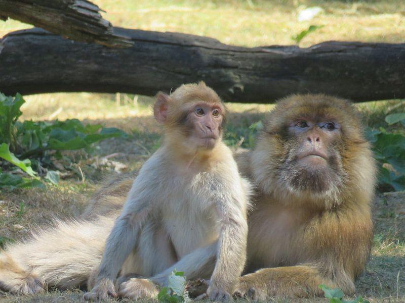 Aap met haar baby - monkey and her baby - Affe mit baby van Ineke Duijzer