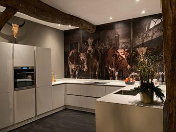 Kundenfoto: Kühe im alten Kuhstall von Inge Jansen