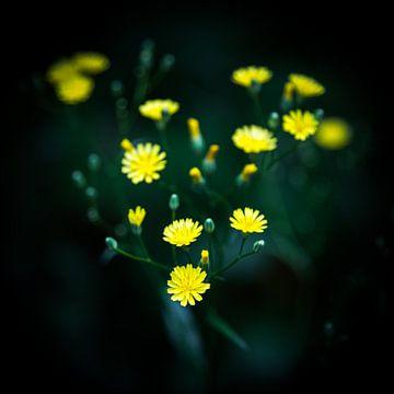 Grünkohl von Fotografie Jeronimo