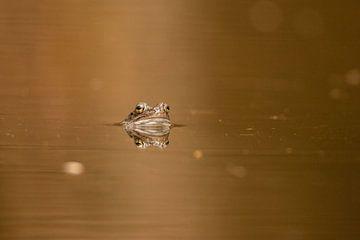Frosch 2 von Marjan Slaats