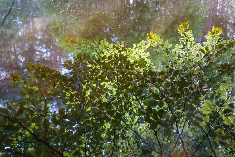 Gespiegelter Wald von Adriana Mueller