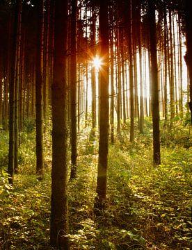 Bayrischer Wald van Renate Knapp