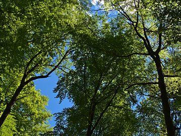 Bos in de lente van Timon Schneider