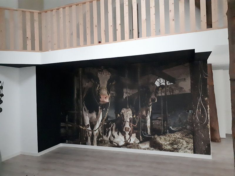 Kundenfoto: Kuhe im alten Kuhstal von Inge Jansen, auf fototapete