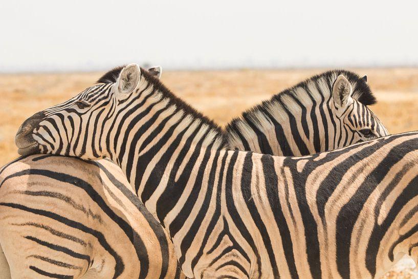 Zebra's in Namibië van Dennis Van Den Elzen