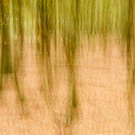 Mystiek bos van Hans Debruyne