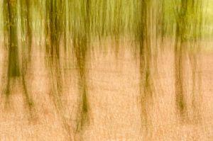 Impressionisme in het bos van Hans Debruyne