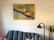 Klantfoto: Kuifmees in herfstsetting van Remco Van Daalen, op canvas