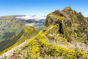 Bloemen in de bergen op Madeira