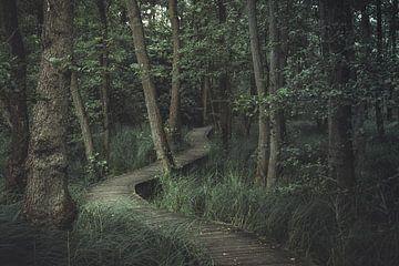 Wandelpad door het bos. van Niels Jaeqx