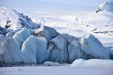 Zwei Raben vor einem Gletscher von Elisa in Iceland