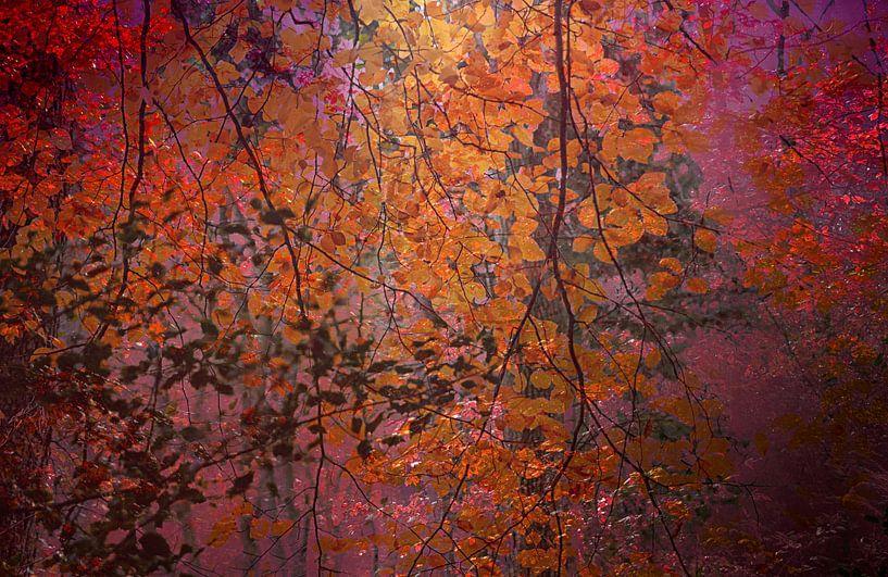 curtain of leaves van Vera Kämpfe