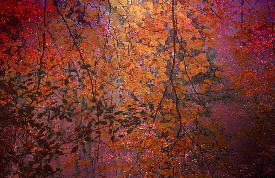 curtain of leaves von Vera Kämpfe