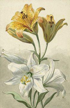 Gelbe und weiße Lilien - Willem van Leen