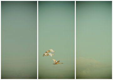 lauwersmeer triptychon 21 von anne droogsma