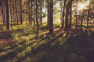 Gestreepte schaduw in het bos