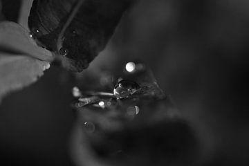 shining raindrop van Mirjam Leyte