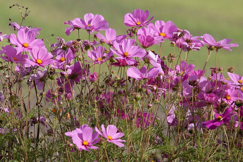 paarse wilde bloemen par l'artiste maurice de vries
