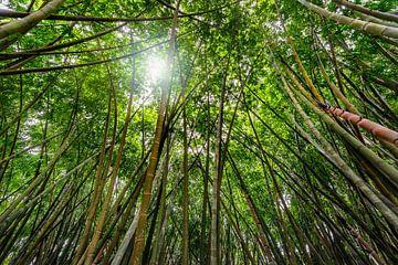 Groot bamboe bos  van