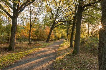 Herfst in het Stropersbos, Stekene, België. sur Nico de Lezenne Coulander