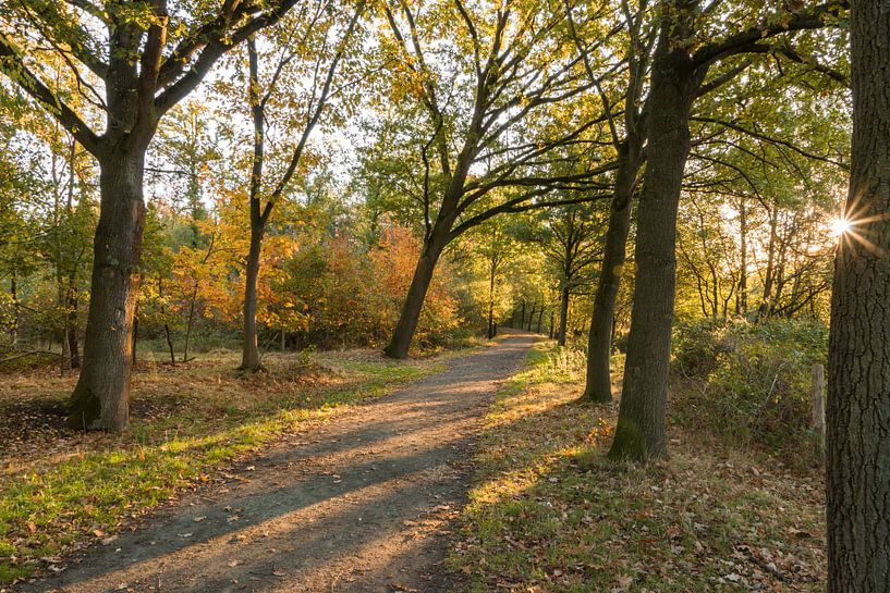 Herfst in het Stropersbos, Stekene, België. van Nico de Lezenne Coulander