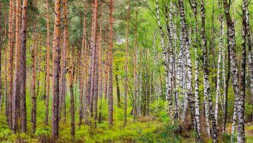 de grens in het bos van