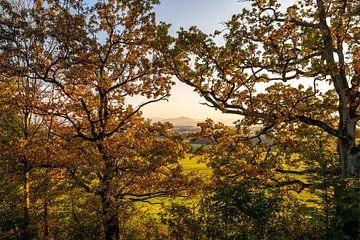 Herfstbomen met een klein uitzicht op de Grünten van Leo Schindzielorz
