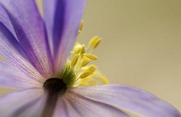 Spring Time Flower sur Marlies Prieckaerts