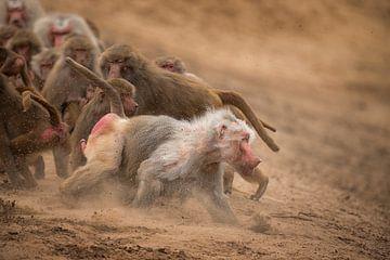 Angry Baboon sur Leon Doorn