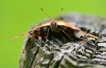 boze vlinder van Petra De Jonge