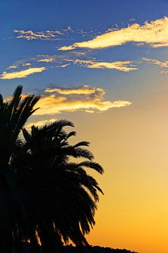 Sunset Palmtree Spain sur Arianor Photography
