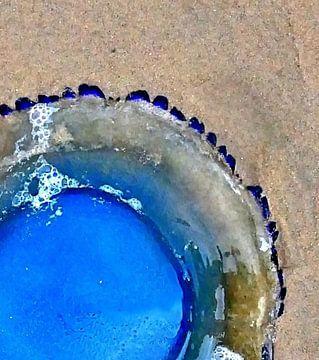 Qualle, medus'art von Borgo San Bernardo