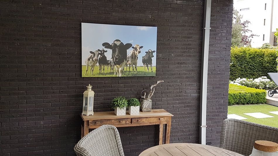 Kundenfoto: Gruppe von Kühen auf einer Wiese, die in die Linse schauen. von Sjoerd van der Wal
