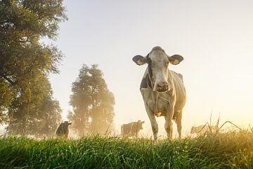 Landschap met dieren van Dirk van Egmond