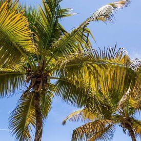 FLORIDA KEYS Paradiesisch von Melanie Viola