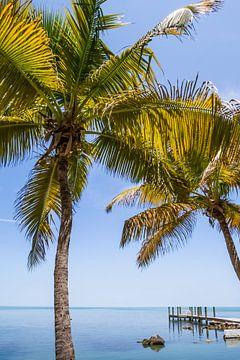 FLORIDA KEYS Just Paradisian van