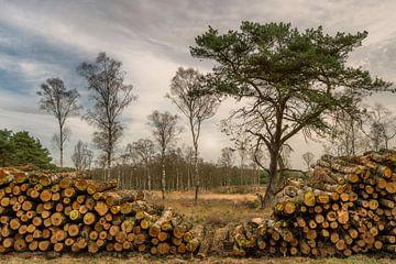 Afgezaagde boomstammen op de Hoge Veluwe van Anges van der Logt